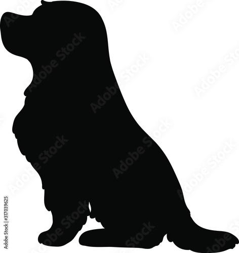 Silhouette of Cocker Spaniel sitting Fototapete