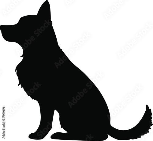 Obraz Silhouette of German Shepherd sitting - fototapety do salonu