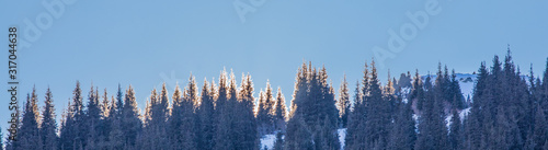 Fototapeta mountain peaks with fir trees in the mountains in winter obraz