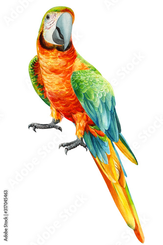 Photo parrot on an isolated white background, watercolor drawing, tropical birds