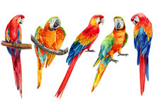 Set Of Parrots On An Isolated White Background, Watercolor Illustration, Clipart Tropical Birds