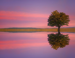Obraz na Szklelonely tree on meadow with lake water reflections at sunset