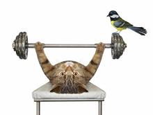 The Beige Cat Athlete Is Doing...