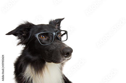 Close up portrait of funny dog wearing glasses Wallpaper Mural