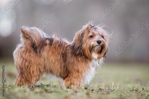 Fotografering portrait of a beautiful dog