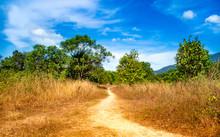 Golden Grassland And Blue Sky