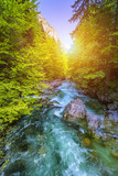 Fototapeta Fototapety z naturą - Beautiful colorful summer landscape with a stream and forest. The river in summer forest and the sun shining through the foliage. Summer nature landscape. Bohinj, Slovenia