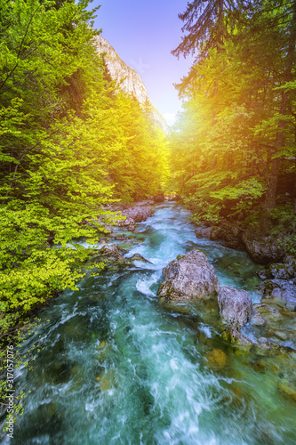 Beautiful colorful summer landscape with a stream and forest. The river in summer forest and the sun shining through the foliage. Summer nature landscape. Bohinj, Slovenia