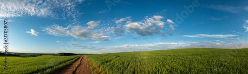 Obraz dirty road in summer green field - fototapety do salonu