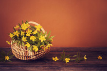 Still Life With Yellow Spring ...