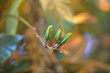 Dry stalk and unblown green bud on a blurred background