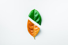 Half Of A Green And Brown Dry Leaves On White Background. - Season Concept.