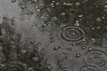 Background Puddle Rain / Circles And Drops In A Puddle, Texture With Bubbles In The Water, Autumn Rain