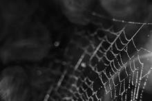 Macro Picture Web / Web Strand...