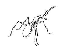 Hand Drawn Ant Insect, Small P...