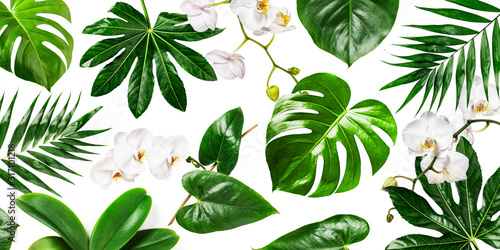 Fototapeta White orchid flowers and tropical green leaves background obraz