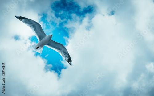 Vászonkép Wolny jak ptak