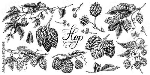 Fotografia Hops and Barley