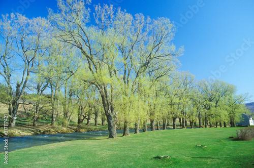Fotografie, Obraz River in Springtime, Williamstown, Massachusetts