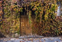 Overgrown Door With Autumn Leaves On A House In Ruins, Old Town In Tbilisi, Georgia