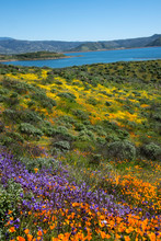 Field Of Flowers Near A Lake In Diamond Valley, California