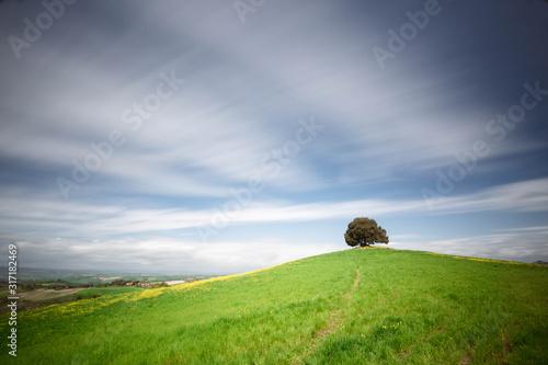 panorama delle colline toscane in primavera, ricoperte da erba verde, in cielo le nuvole bianche e cumuliformi Wallpaper Mural