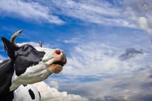 Horizontal Portrait Of Cow On ...