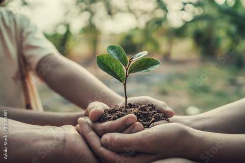 Obraz three hand holding tree for planting. concept earth day - fototapety do salonu