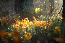 Beautiful Nature Background Of Autumn Grass. A Ray Of Light Break Through Branches