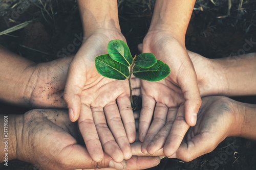 hand protection tree in garden concept save earth Fototapet