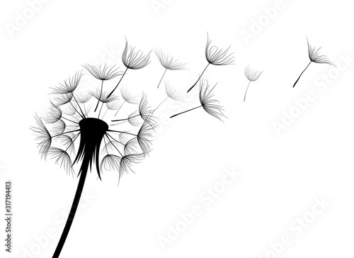 Fototapeta The Field dandelion flower sketch. obraz