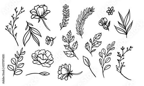 Obraz set of hand drawn leaf vector illustration, flower lineart isolated graphic elements for your design, floral lineart for classic design - fototapety do salonu