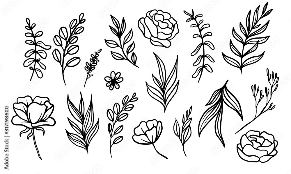 Fototapeta set of hand drawn leaf vector illustration, flower lineart isolated graphic elements for your design, floral lineart for classic design