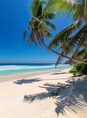 Obraz na Szkle Optyczne powiększenie Tropical white sand beach with coco palms and the turquoise sea on Caribbean island.