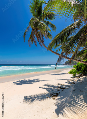 Fototapeta Tropical white sand beach with coco palms and the turquoise sea on Caribbean island.	 obraz