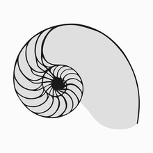 Golden Ratio Or Fibonacci In N...