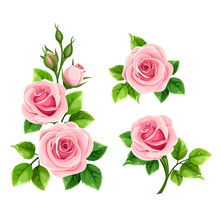 Vector Set Of Pink Roses Isola...