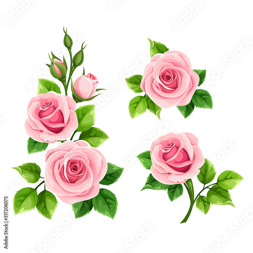 Fototapeta Vector set of pink roses isolated on a white background. obraz