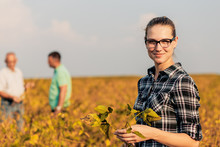 Portrait Of Young Female Farmer Standing In Soybean Field Examining Crop With Colleagues.