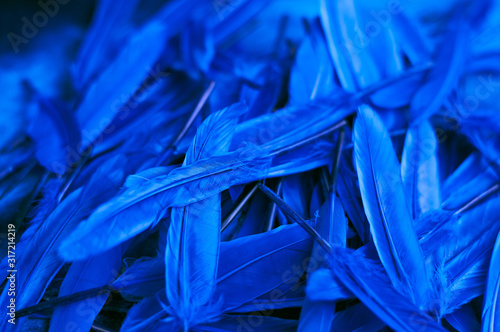 background; blue feathers; color of the year 2020
