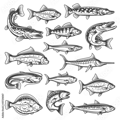Vector fish species, ocean, sea and freshwater Slika na platnu