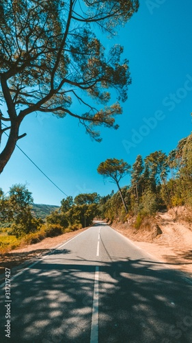 Vertical shot of a road surrounded by green trees under the beautiful blue sky