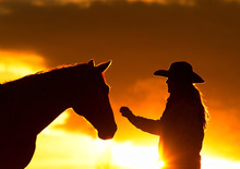 Cowgirl And Horse Silhouette Girl With Western Cowboy Hat Reaching Out To Touch Horse Head At Sunset Showing Bond Between Horse And Female Horizontal Format Room For Type Sunset Background
