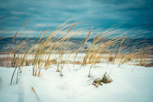 Cold Wind Blowing Reeds At Sno...