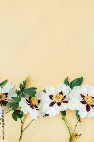 Obraz White peonies flowers on yellow background. Flat lay, top view minimal floral composition. - fototapety do salonu