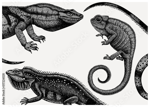 Fotografie, Obraz Hand sketched reptiles design