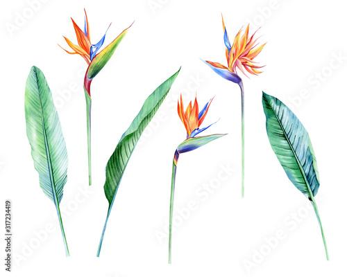 Fototapeta Watercolor isolated tropical flowers and leaves - banana, palm , strelitzia. Great for Hawaii wedding, beach party, tropical wedding invites obraz na płótnie