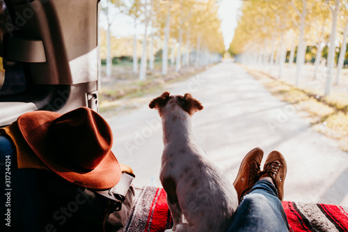Fotografía cute jack russell dog and woman legs relaxing in a van
