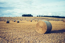 Wide Field With Straw Bales
