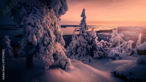 Winter snow covered trees. Wallpaper Mural